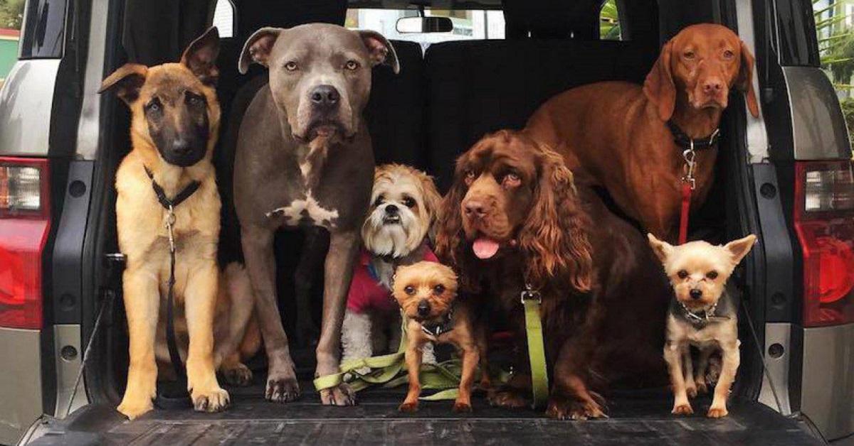 I cani sanno cos'è l'ingiustizia? La sentono?