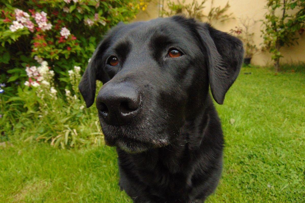 I cani sentono buone e cattive vibrazioni nell'aria?