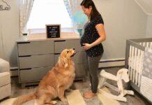il-cane-non-vedeva-lora-che-il-bimbo-nascesse-per-realizzare-i-suoi-sogni