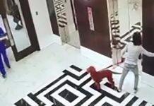 il-cucciolo-viene-salvato-prima-di-soffocare-a-causa-di-un-ascensore