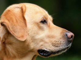 il sistema nervoso del cane