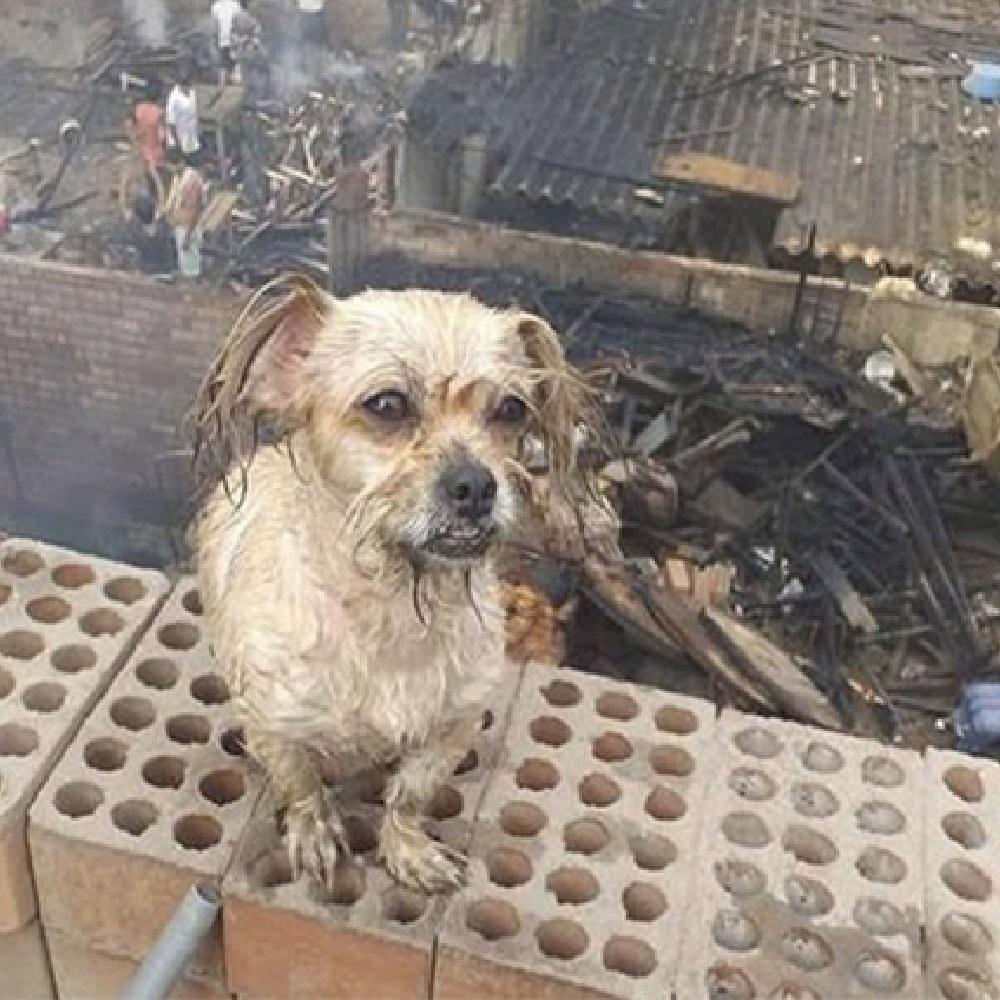 incendio-cane