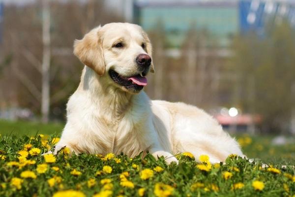 cane in prato fiorito