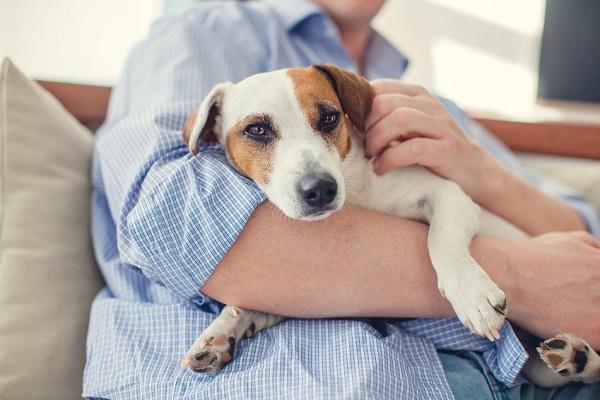 cane tra le braccia di un uomo