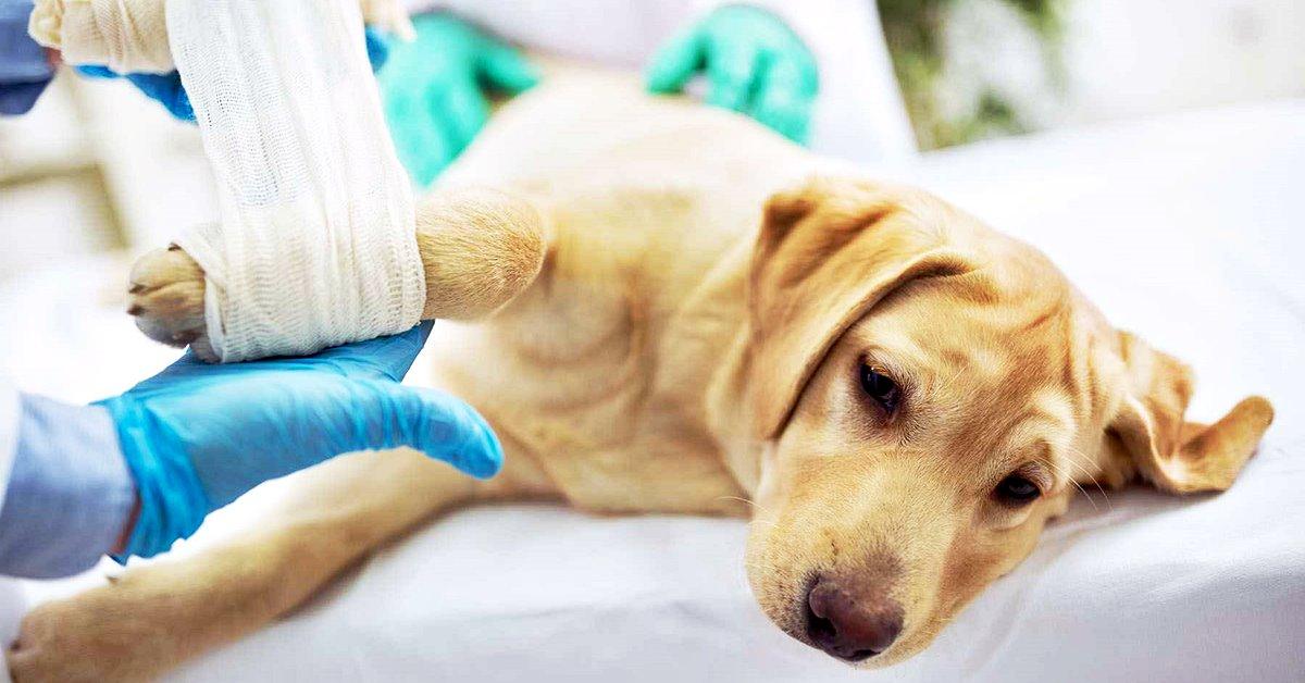 frattura alle ossa del cane