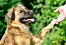 cane che da la zampa