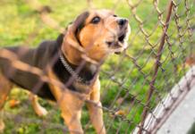 cane che abbaia dietro il recinto