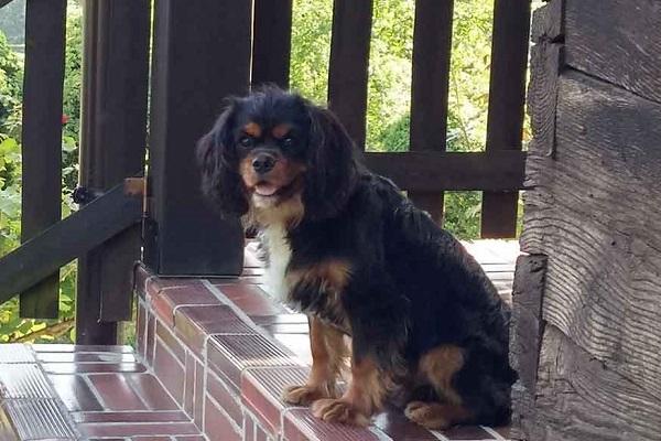 cane sotto il portico