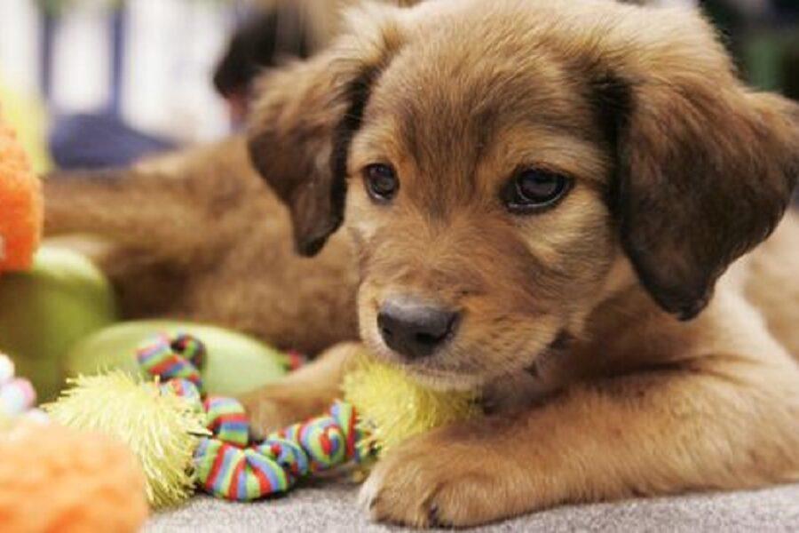 cucciolo di cane e giocattolo
