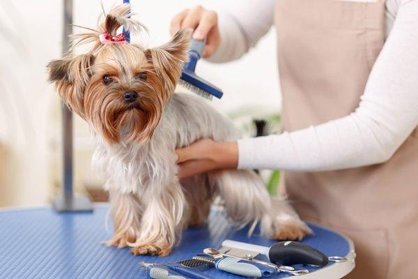 spazzolare un cane piccolo
