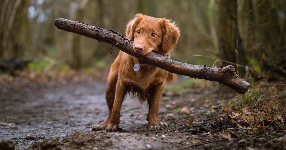 cane con bastone