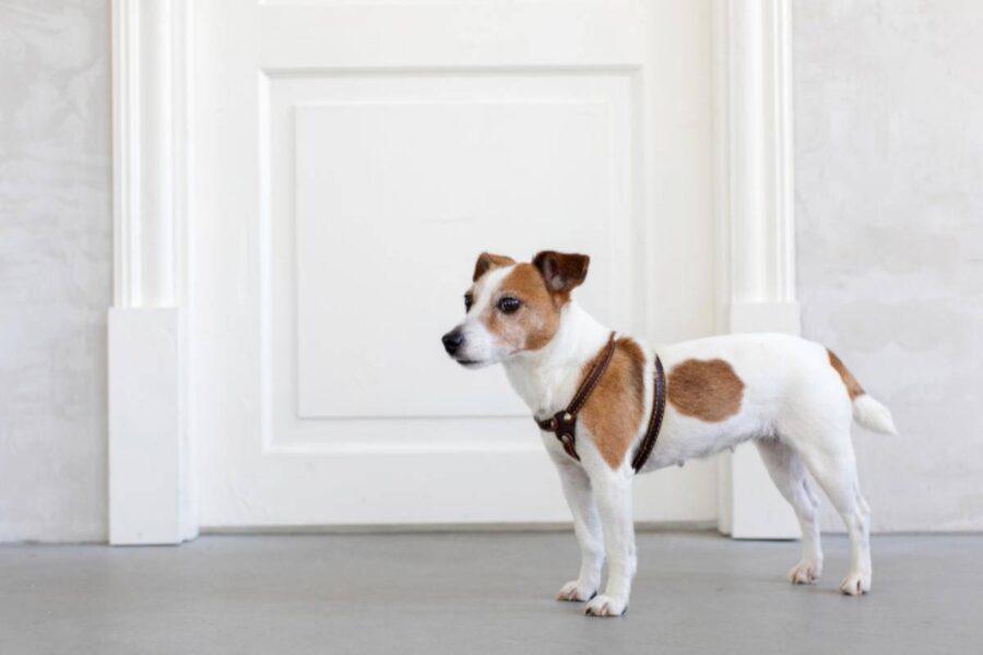 cane davanti alla porta chiusa
