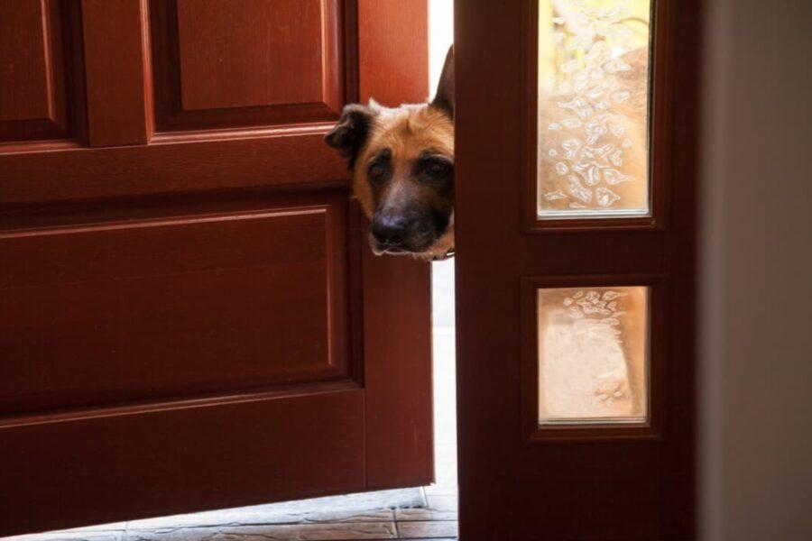 cane davanti alla porta di ingresso