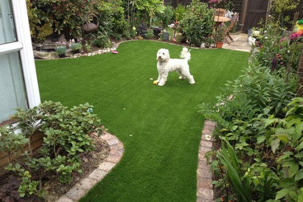 Come insegnare al cane a stare fuori dal giardino