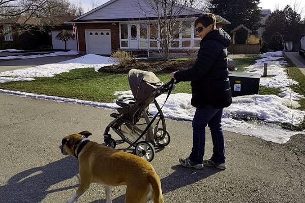 Come insegnare al cane a usare il passeggino