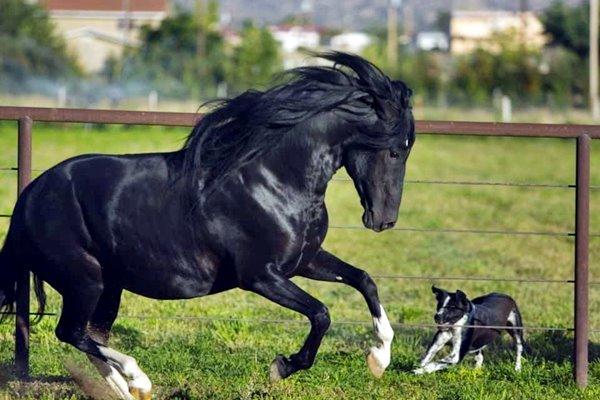 recinto di sicurezza per cane e cavallo