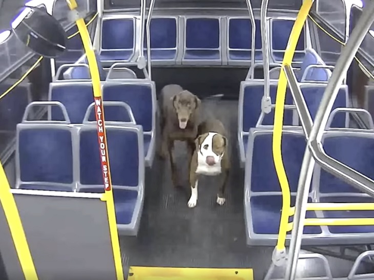 jamie-cani-salvi