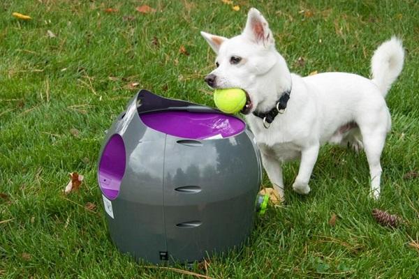 Lanciapalline automatico per cani: come farlo in casa