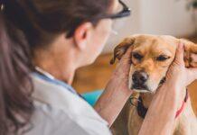 massaggiare il cane