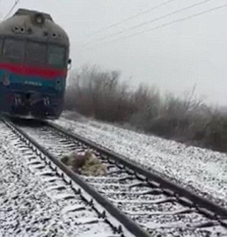 panda-treno
