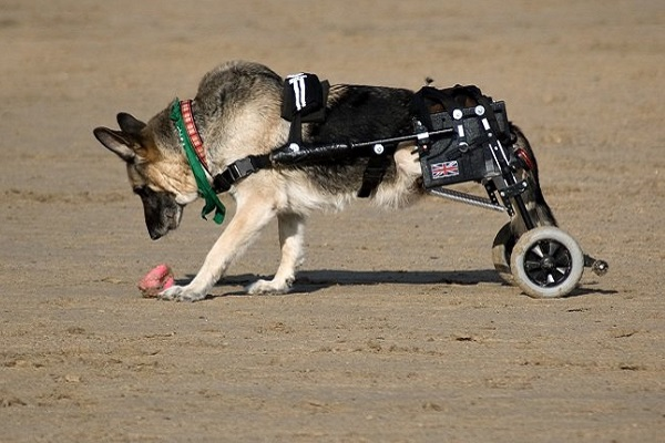 cane che gioca in piaggia