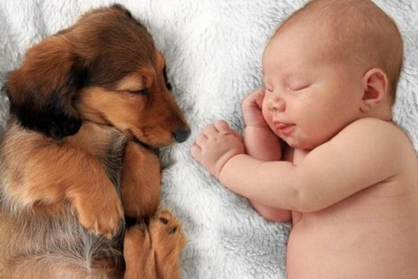 neonato e cane che dormono