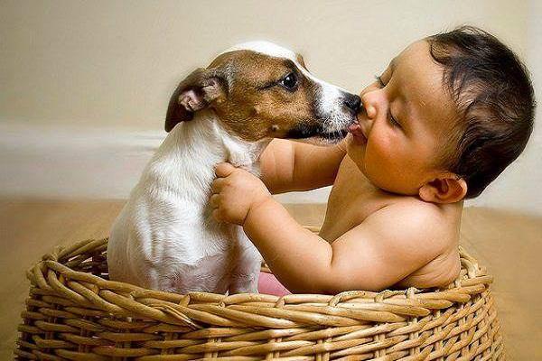 bimbo e cane dentro una cesta