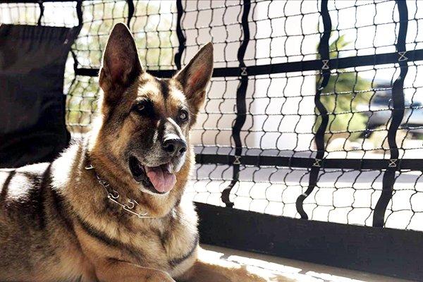 rete di protezione per cani