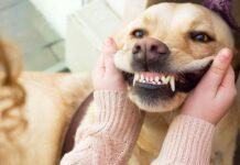 controllo dei denti del cane
