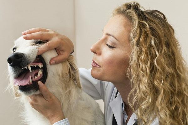 ragazza controlla denti cane