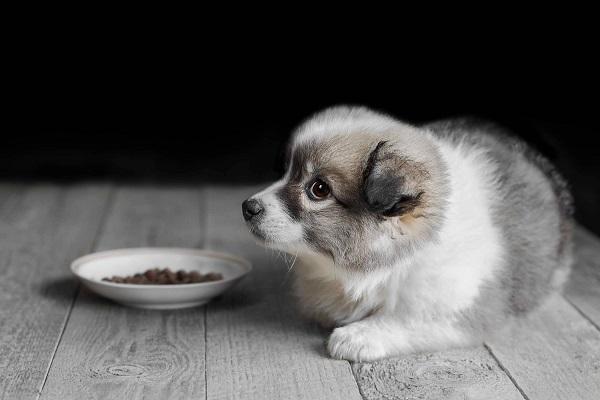 cucciolo di cane e crocchette