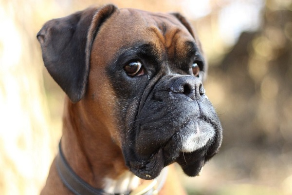 5 razze di cani che fanno più pipì: ecco quali sono e perché