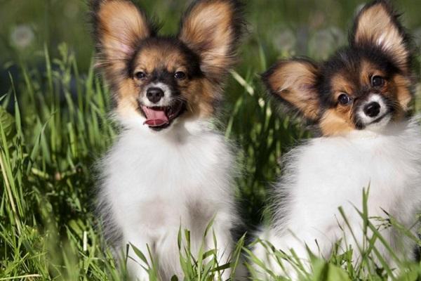 cani che si adattano facilmente