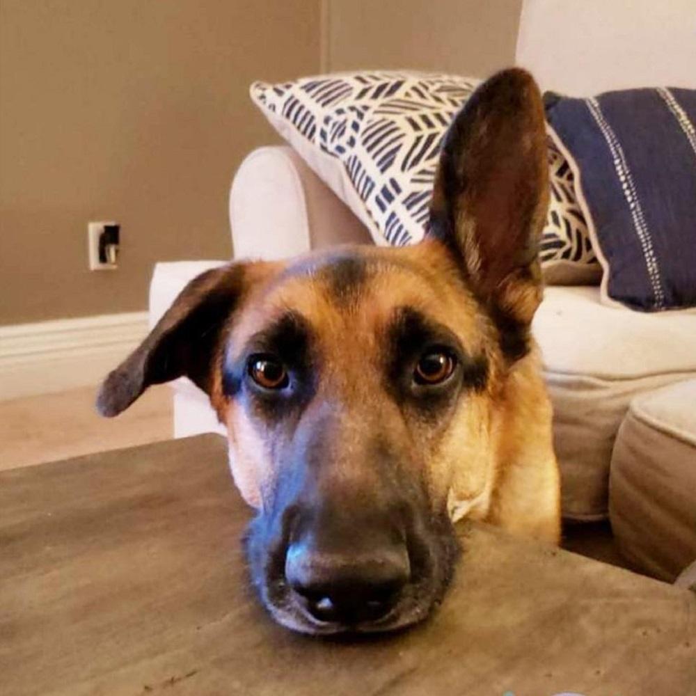 rocco-cane