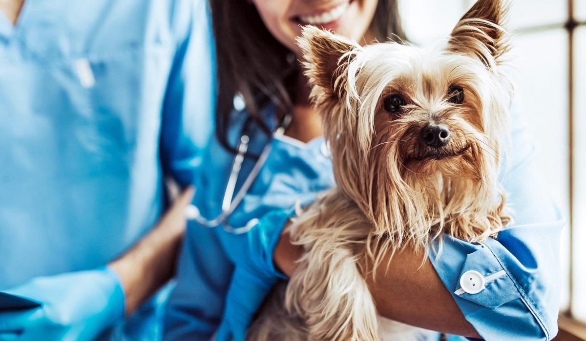 cane in braccio al veterinario