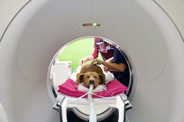 risonanza magnetica del cane