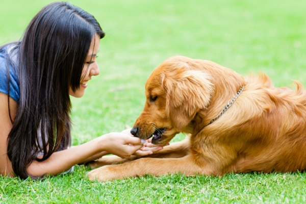 cane e ragazza al parco