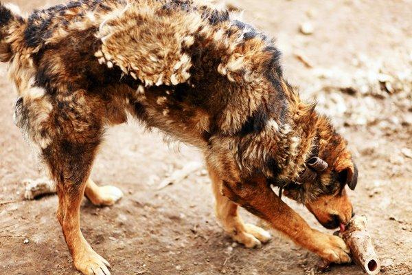 perdita di pelo anomala del cane