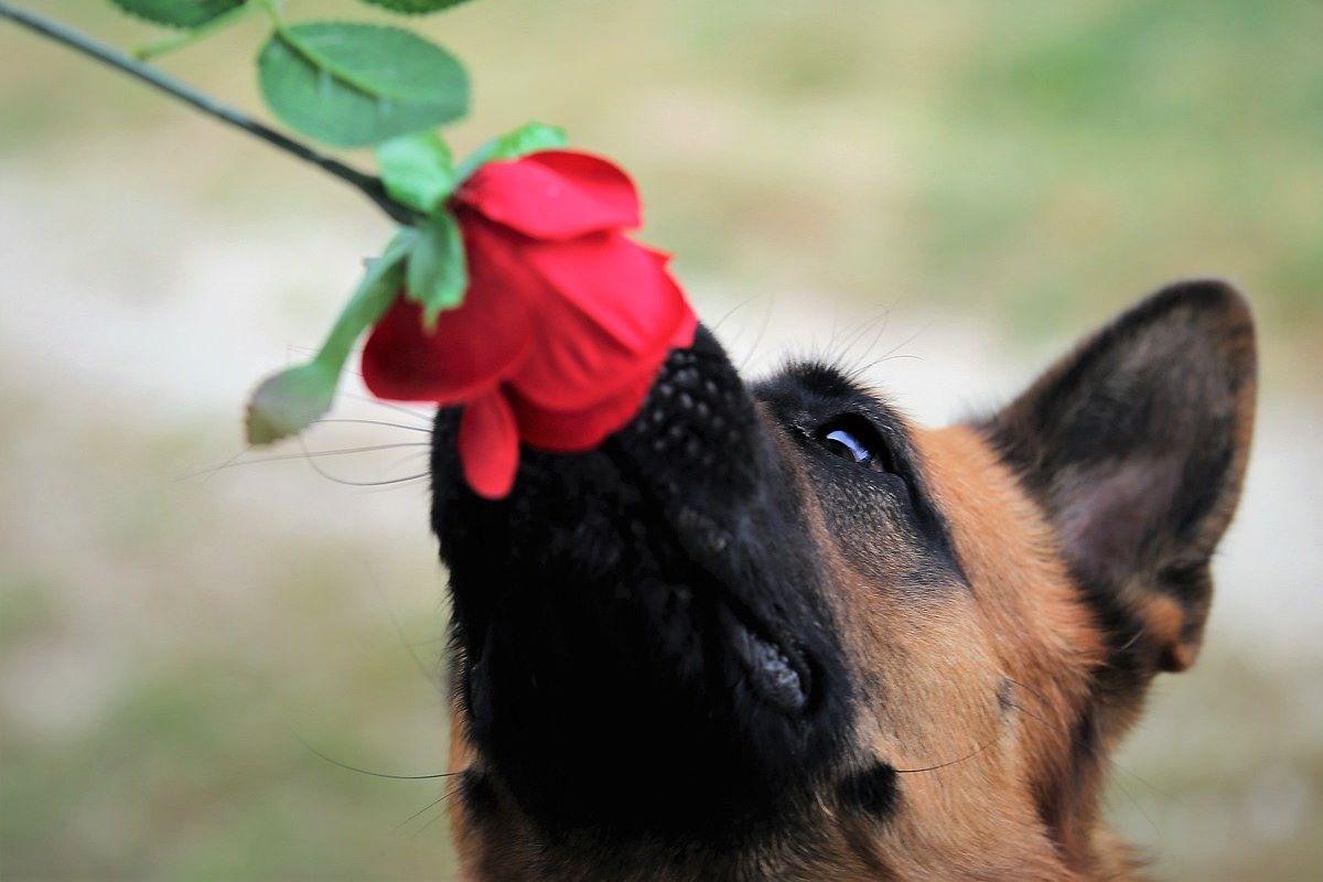Come funziona il sistema nervoso del cane?