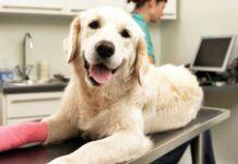 cane con la zampa rotta