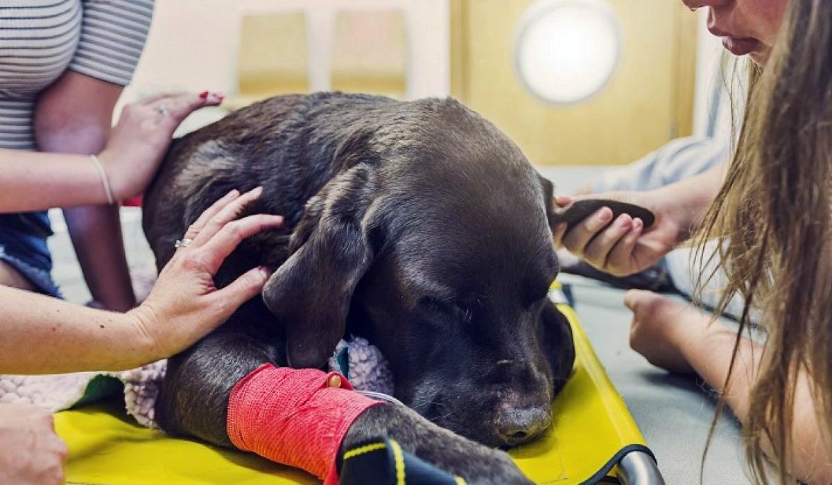 Tanax per cani, cosa sapere su questo farmaco per l'eutanasia