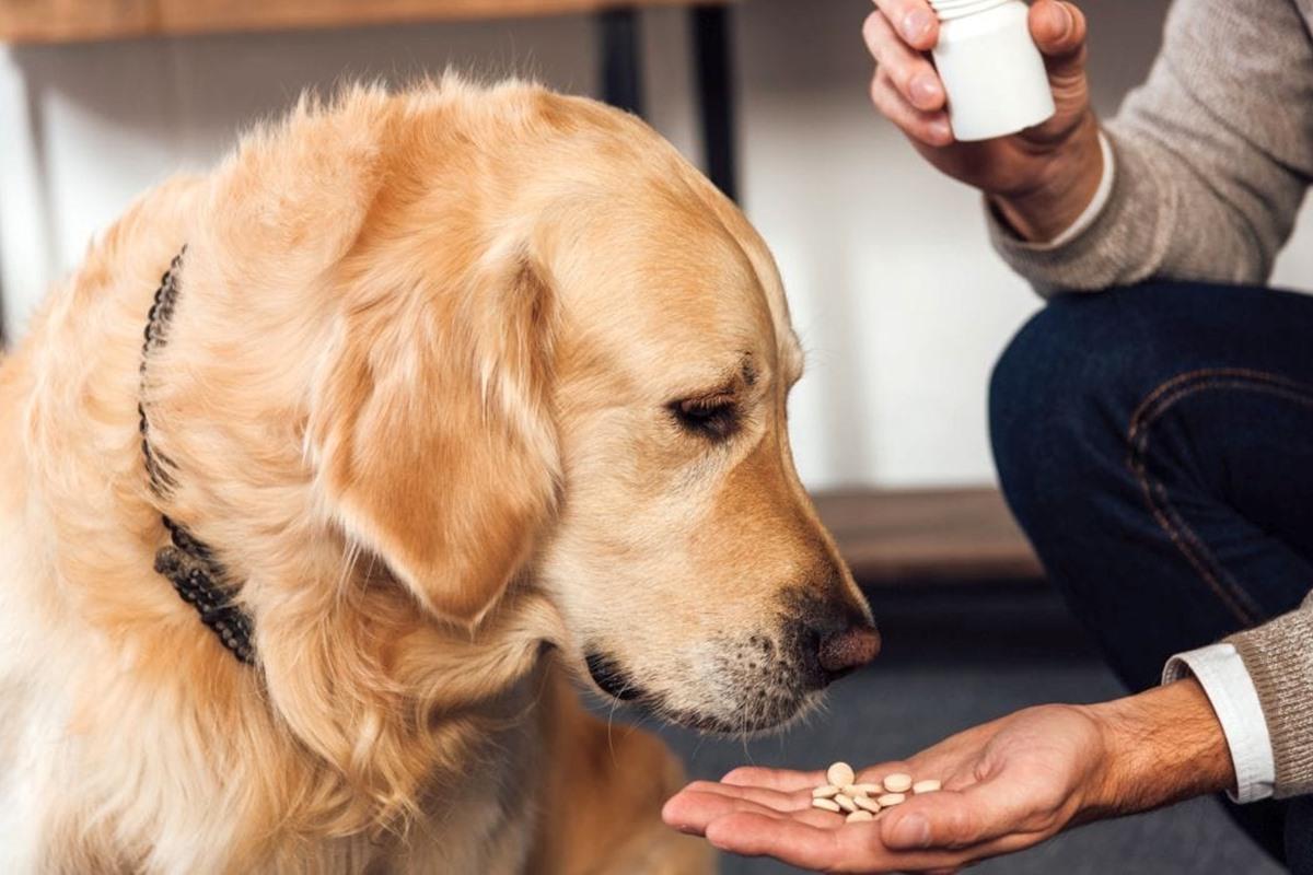 dare le pillole al cane