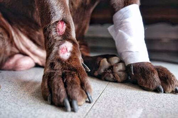 lesioni alle zampe del cane