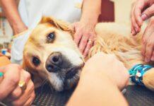 curare il cane