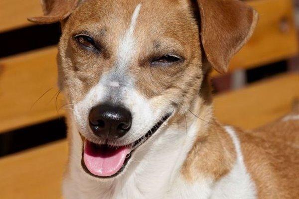 paralisi facciale del cane