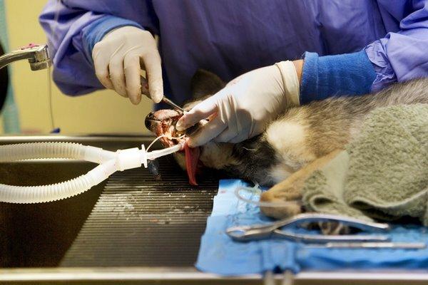 intervento chirurgico nel cane