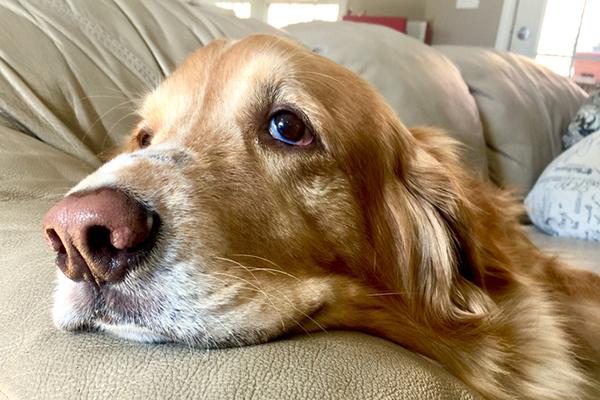 Tumore delle ghiandole anali del cane: ecco cosa sapere
