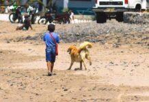 un-cane-ed-un-ragazzo-cercano-di-sconfiggere-la-poverta-vendendo-gelati