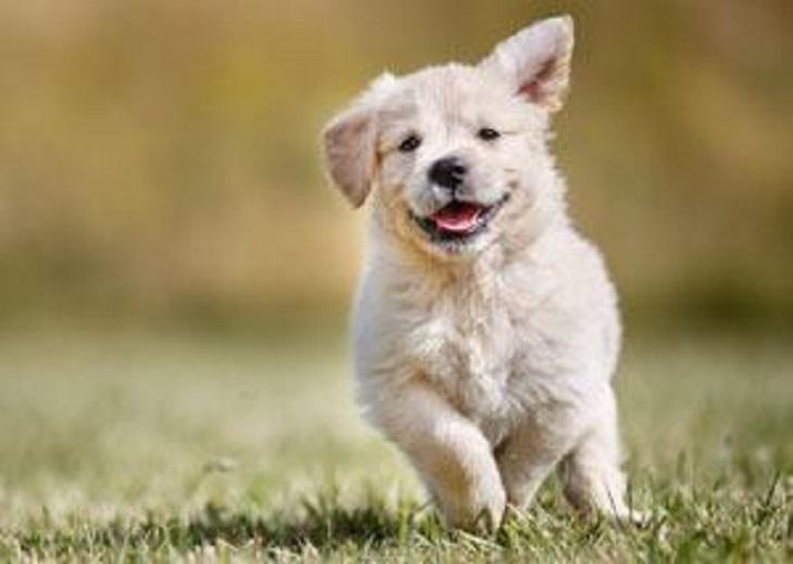 veneto-cane-felice