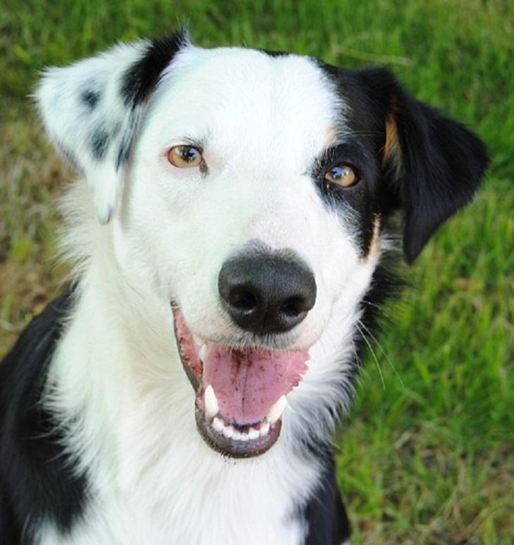 veneto-decisione-cane